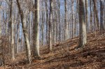 "A beech section of the woods. They say,""Life's a beech."""