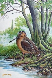 Wetland Woodcock. One of my recent paintings in the game bird series.