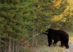 The bear...sorry!
