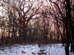 The early horizon.