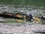 Map Turtles