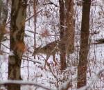 Small buck