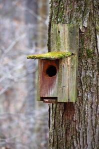 A bird box I had erected has seen better days.