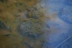 Frog eggs!