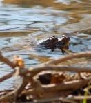 Toads!
