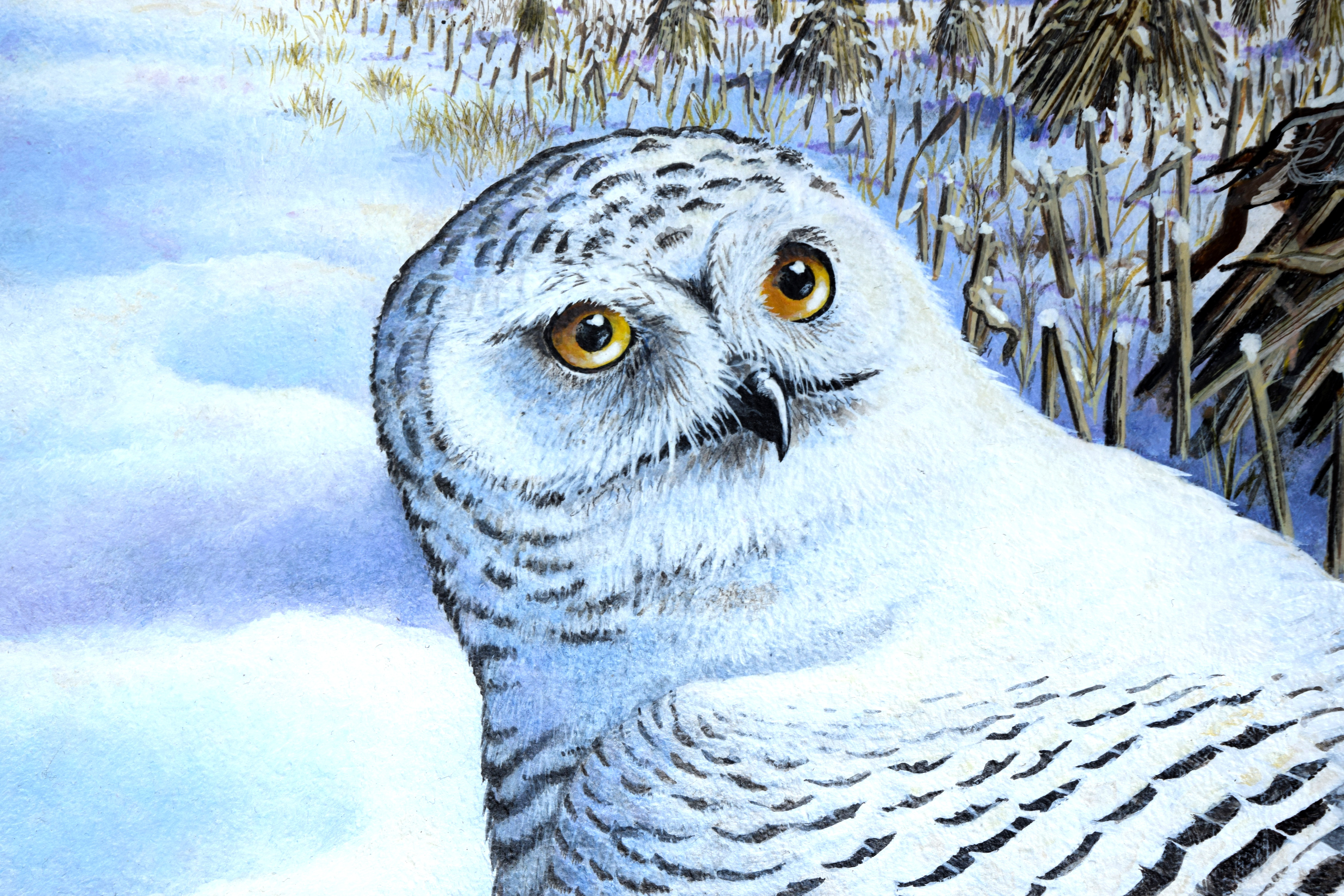 Snowy Owl Painting | Larry A. Smail's Blog